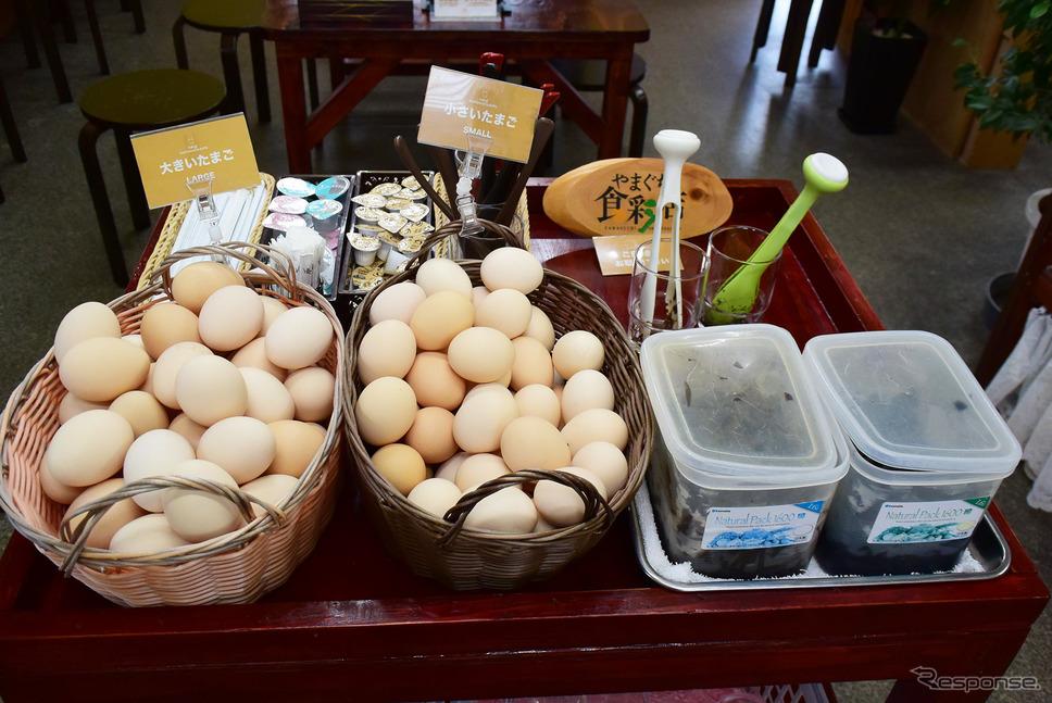 とりたまの里では新鮮たまごが食べ放題。ドリンクセットで500円だ。《写真撮影 井元康一郎》