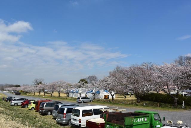 渡良瀬バルーンレース、藤岡さくら祭り会場。7日金曜日は晴れ間も見られたが、強風でフライト中止。