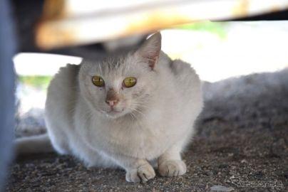 「エンジンルームに猫が」JAFへの救援依頼、1か月で42件