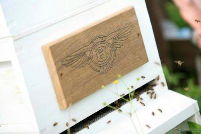 ベントレー、「世界ミツバチの日」に合わせて養蜂を再開…新型コロナによる休止を解除