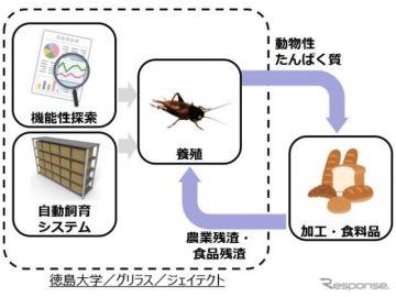 コオロギを食糧に---ジェイテクト、産学連携で資源化を推進
