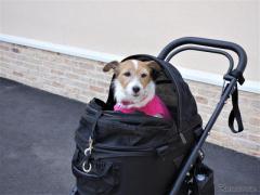 【青山尚暉のわんダフルカーライフ】ドライブ旅行におけるドッグカートの利便性を検証してみた