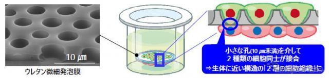ハンドルの技術を活用して新薬 豊田合成が細胞の培養技術を開発