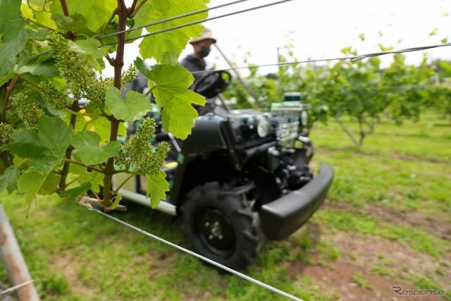 ブドウ果樹園でUGV走行試験《写真提供 ヤマハ発動機》