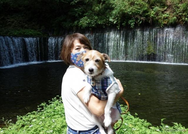 夏の愛犬同伴ドライブ、注意点&必須アイテム《写真撮影 青山尚暉》