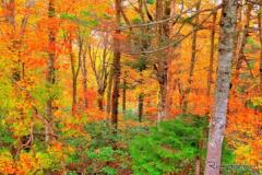 紅葉が美しいキャンプ場100選、1位は福井県九頭龍
