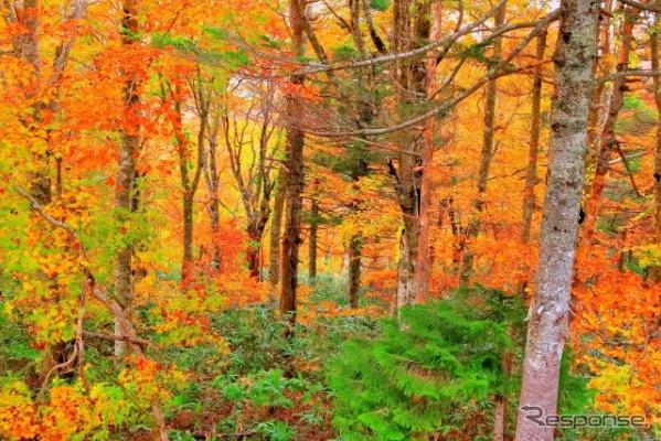全国 紅葉が美しいキャンプ場(イメージ)《写真提供 キャンピングカー株式会社》
